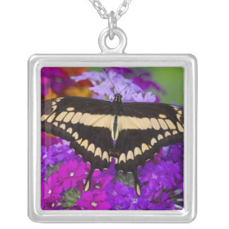 Sammamish, Washington Tropical Butterfly 36 Square Pendant Necklace
