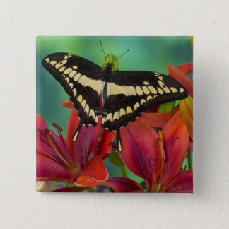 Sammamish, Washington Tropical Butterfly 37 15 Cm Square Badge