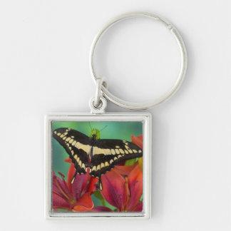 Sammamish, Washington Tropical Butterfly 37 Key Ring
