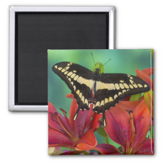 Sammamish, Washington Tropical Butterfly 37 Magnet
