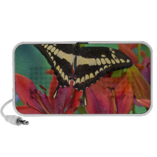 Sammamish, Washington Tropical Butterfly 37 Speakers