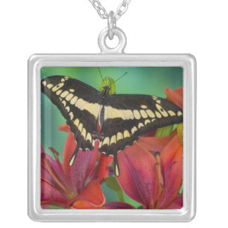 Sammamish, Washington Tropical Butterfly 37 Square Pendant Necklace