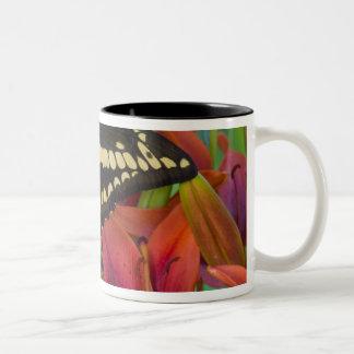 Sammamish, Washington Tropical Butterfly 37 Two-Tone Coffee Mug