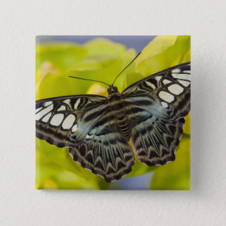 Sammamish, Washington Tropical Butterfly 38 15 Cm Square Badge