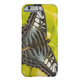 Sammamish, Washington Tropical Butterfly 38 Barely There iPhone 6 Case