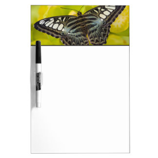 Sammamish, Washington Tropical Butterfly 38 Dry Erase Board