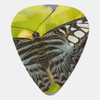 Sammamish, Washington Tropical Butterfly 38 Guitar Pick