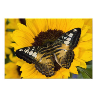 Sammamish, Washington Tropical Butterfly 38 Photo Print