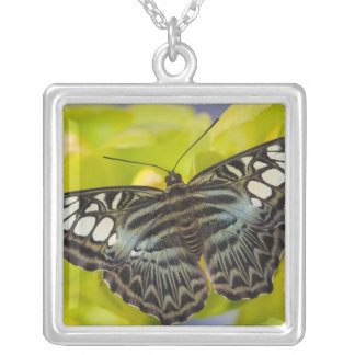 Sammamish, Washington Tropical Butterfly 38 Silver Plated Necklace