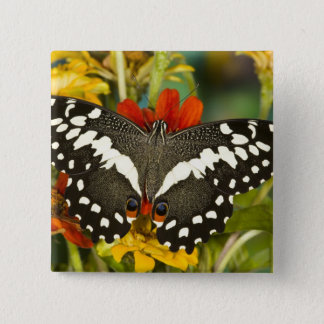 Sammamish, Washington Tropical Butterfly 39 15 Cm Square Badge