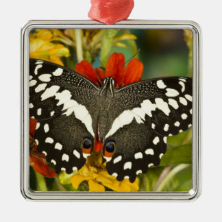 Sammamish, Washington Tropical Butterfly 39 Christmas Ornament