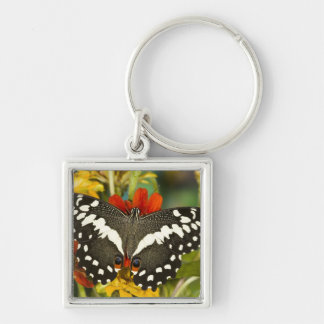 Sammamish, Washington Tropical Butterfly 39 Key Ring