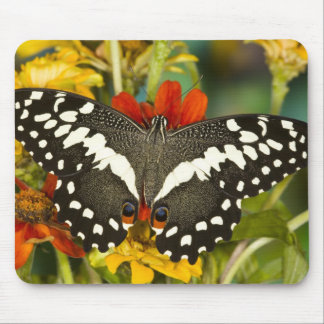 Sammamish, Washington Tropical Butterfly 39 Mouse Mat