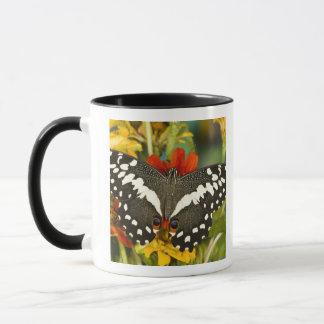 Sammamish, Washington Tropical Butterfly 39 Mug