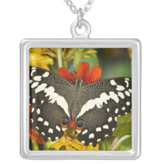 Sammamish, Washington Tropical Butterfly 39 Square Pendant Necklace
