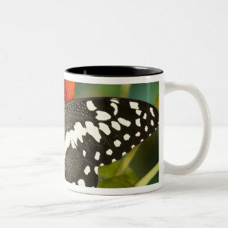 Sammamish, Washington Tropical Butterfly 39 Two-Tone Coffee Mug