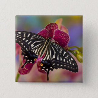Sammamish, Washington Tropical Butterfly 3 15 Cm Square Badge