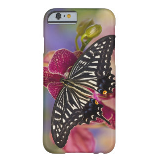 Sammamish, Washington Tropical Butterfly 3 Barely There iPhone 6 Case