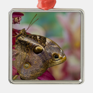 Sammamish, Washington Tropical Butterfly 3 Christmas Ornament