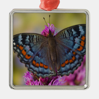 Sammamish Washington Tropical Butterfly 3 Christmas Ornament