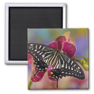 Sammamish, Washington Tropical Butterfly 3 Magnet