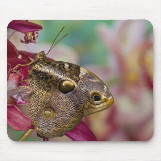 Sammamish, Washington Tropical Butterfly 3 Mouse Mat