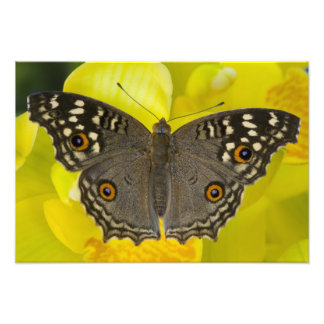 Sammamish Washington Tropical Butterfly 3 Photo Print