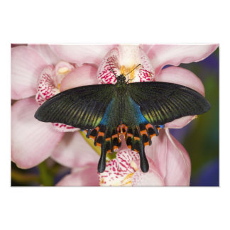 Sammamish, Washington Tropical Butterfly 3 Photo Print