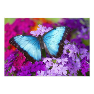 Sammamish Washington Tropical Butterfly 3 Photo Print