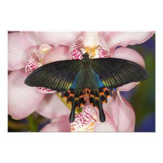 Sammamish, Washington Tropical Butterfly 3 Photo Print