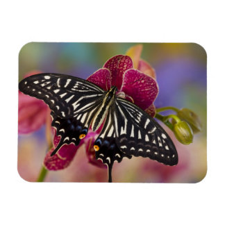 Sammamish, Washington Tropical Butterfly 3 Rectangular Photo Magnet