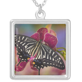 Sammamish, Washington Tropical Butterfly 3 Silver Plated Necklace