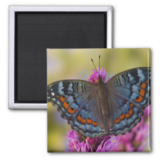 Sammamish Washington Tropical Butterfly 3 Square Magnet