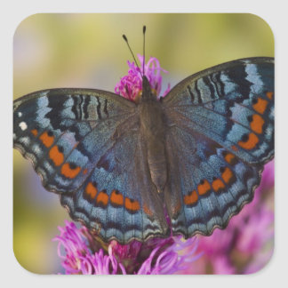Sammamish Washington Tropical Butterfly 3 Square Sticker