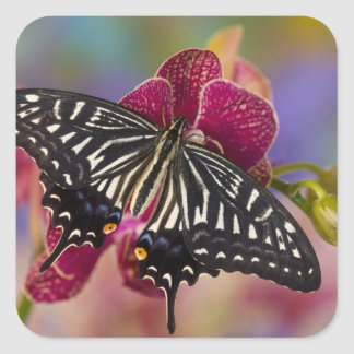 Sammamish, Washington Tropical Butterfly 3 Square Sticker