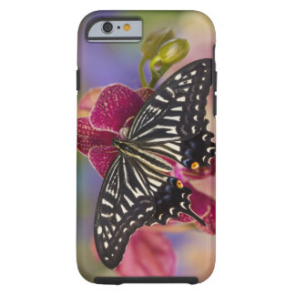Sammamish, Washington Tropical Butterfly 3 Tough iPhone 6 Case