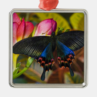 Sammamish, Washington Tropical Butterfly 40 Christmas Ornament