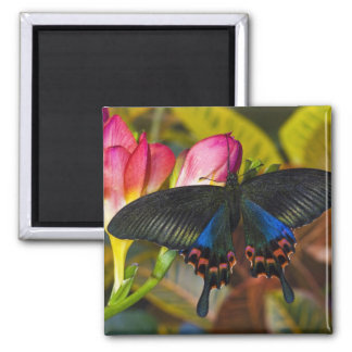 Sammamish, Washington Tropical Butterfly 40 Magnet