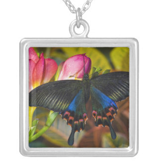 Sammamish, Washington Tropical Butterfly 40 Pendants