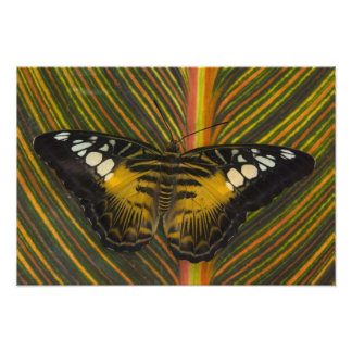 Sammamish, Washington Tropical Butterfly 40 Photo Print