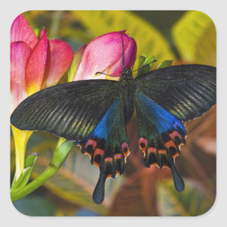 Sammamish, Washington Tropical Butterfly 40 Square Sticker