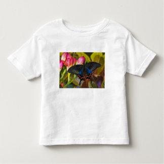 Sammamish, Washington Tropical Butterfly 40 Toddler T-Shirt