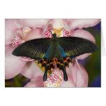 Sammamish, Washington Tropical Butterfly 41