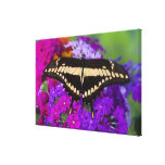 Sammamish, Washington Tropical Butterfly 41 Gallery Wrapped Canvas