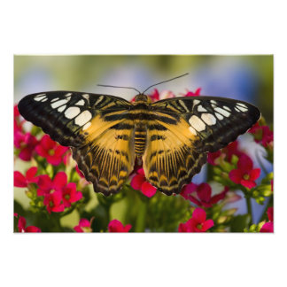 Sammamish, Washington Tropical Butterfly 41 Photo Print