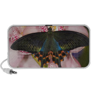 Sammamish, Washington Tropical Butterfly 41 Notebook Speakers
