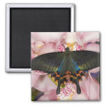 Sammamish, Washington Tropical Butterfly 41 Square Magnet