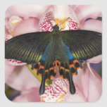 Sammamish, Washington Tropical Butterfly 41 Square Stickers