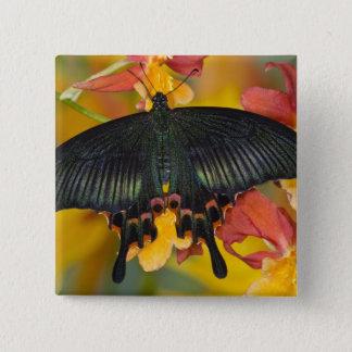 Sammamish, Washington Tropical Butterfly 42 15 Cm Square Badge