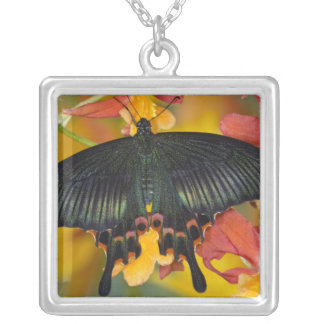 Sammamish, Washington Tropical Butterfly 42 Square Pendant Necklace